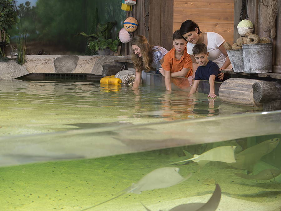 Fort Wayne Children's Zoo - Stingray Bay